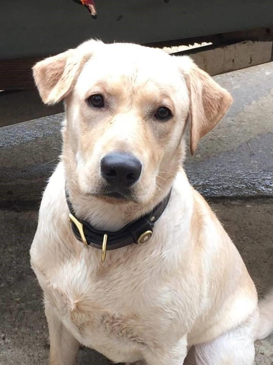 Lost Dog Dakota