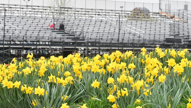 Critics have complained that preparations for the Detroit Grand Prix begin just at the moment the brilliant yellow of the daffodil blooms speckle Belle Isle.
