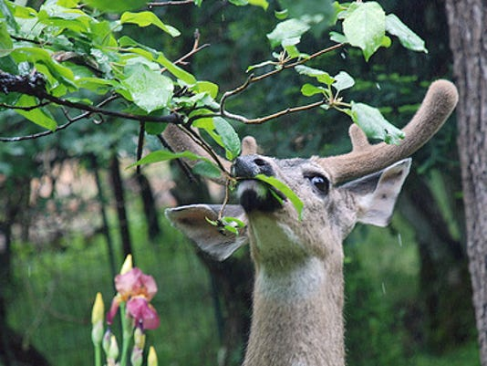 MNCO 1007 Dick Martin Notes on Ohio's biggest bucks database.jpg
