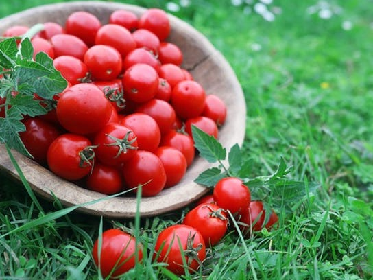 Fresh tomatoes in a wooden bowl