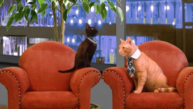 "The Michigan Humane Society's (MHS) ""Cat Tank"" video parodies the television show ""Shark Tank."" MHS hopes the video will get more cats adopted."