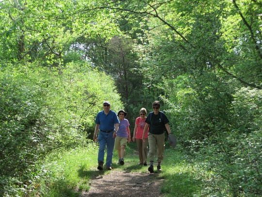 Naturalist-led forest fitness walks take place during