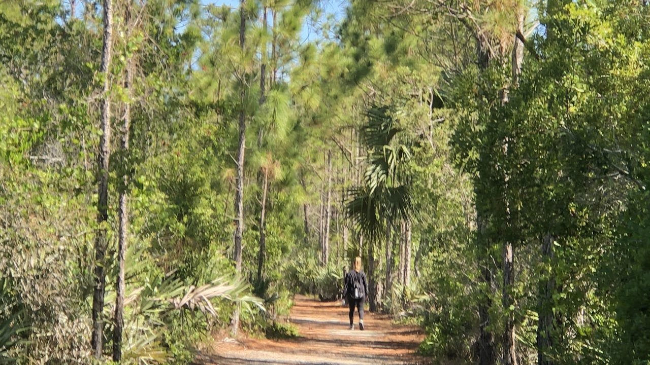 Join entertainment reporter/columnist Laurie K. Blandford through the trails of one of St. Lucie County's earliest preserves. DACIA JOHNSON/TCPALM