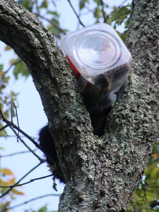 OSH 0702 Bear in Cookie Jar WEB