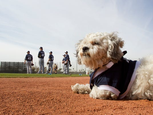 2014-03-16-hank-the-dog-brewers