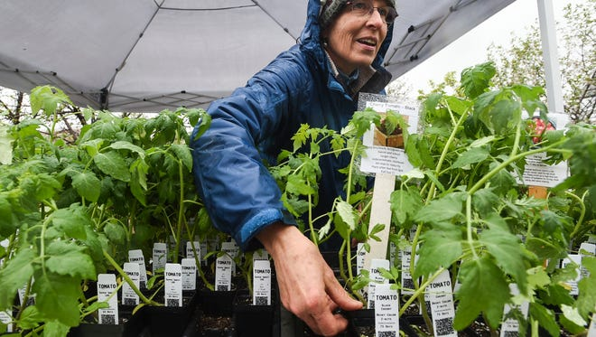 Volunteer Karen Spencer rearranges plants during the spring plant sale Friday, May 8, 2015, at the Gardens on Spring Creek in Fort Collins, CO. The sale will continue through the weekend.