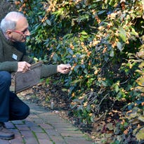 Native Del. fruit-bearing shrubs add bright color, feed wildlife