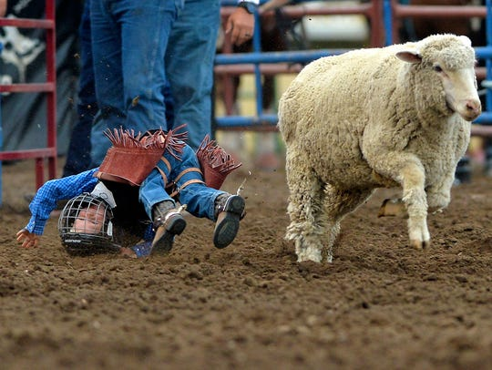 Kids can try mutton bustin' during the Big Sky Pro Rodeo at Montana State Fair.