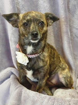 Sweet little Laylah has an awesome personality. Her beautiful eyes will melt your heart.