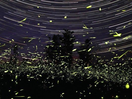 Backyard volunteers help track firefly numbers