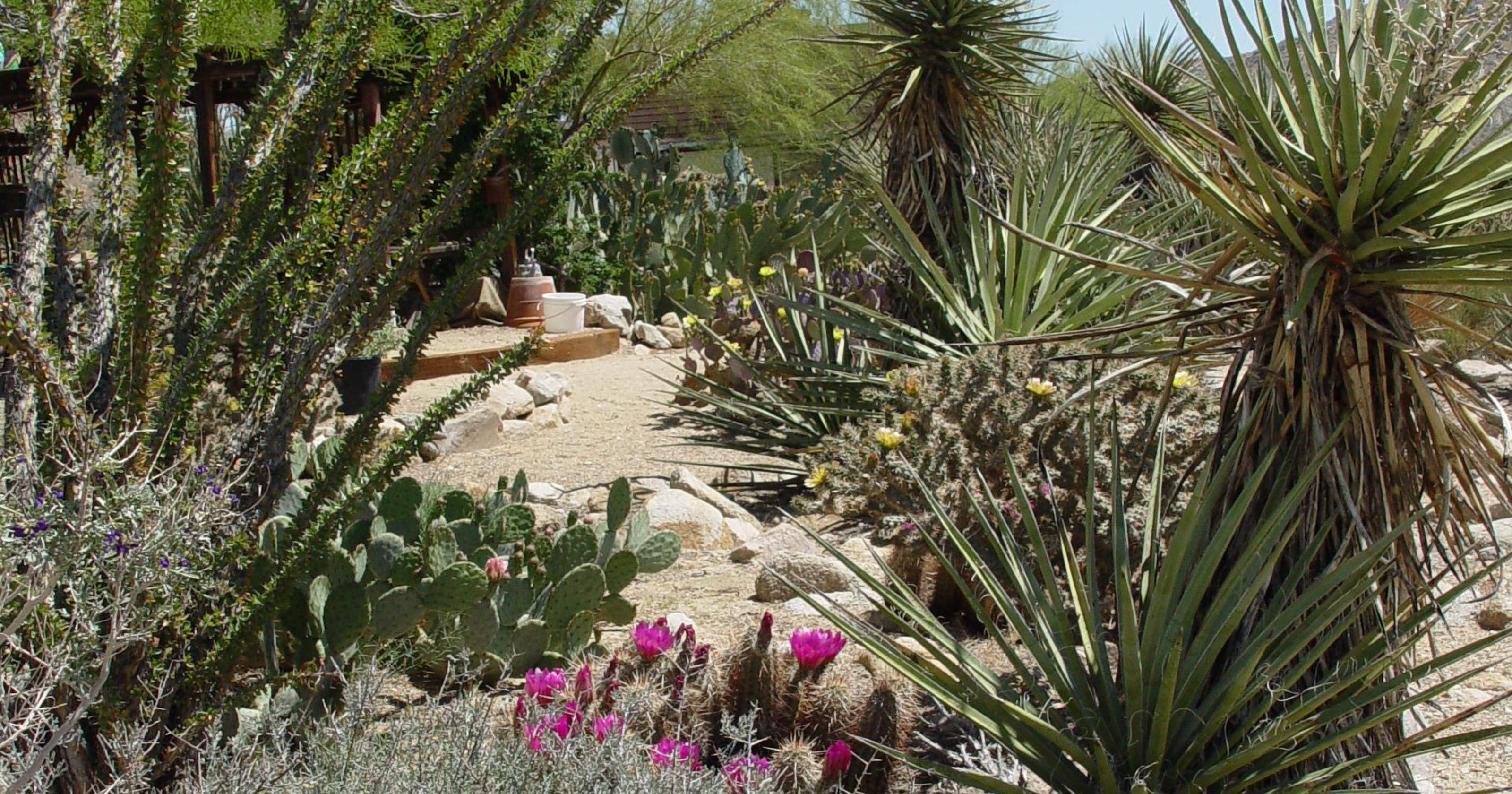 Keeping a new generation of rodents off your desert garden