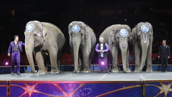 Elephants perform in the Ringling Bros. and Barnum