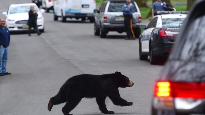 A number of other bear sightings have been reported since April, including this black bear in Paramus on April 30.