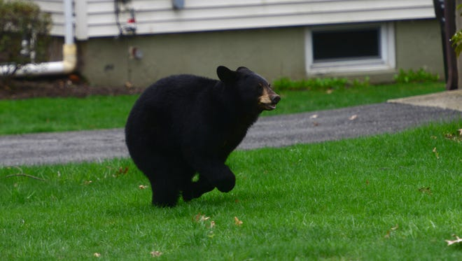 A black bear runs across the lawn of a home on Benton Road in Paramus on Monday April 30, 2018.