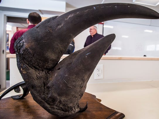 A black rhino horn stolen from the University of Vermont's