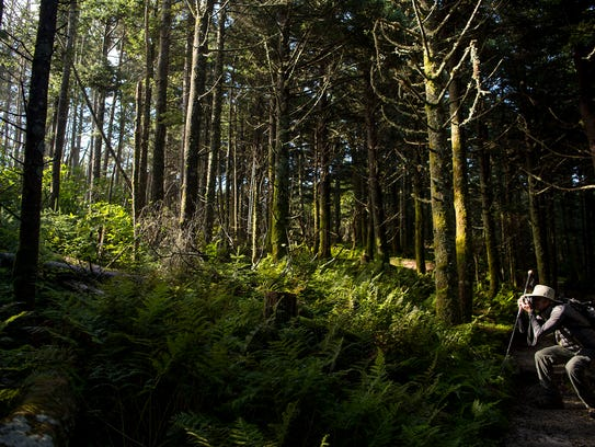 Light streams into the dense wilderness at Mount Mitchell
