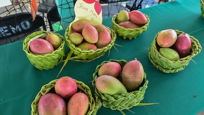 Giant mangoes were on display during the 10th Annual Agat Mango Festival in Agat on May 8.
