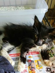 Miracle when she was first found by Feline Lifeline volunteers.