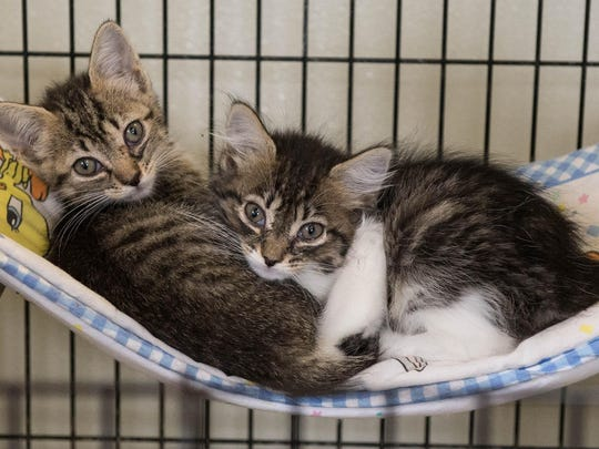 Two kittens cuddle at the Calhoun County Animal Shelter on Union Street in Battle Creek.