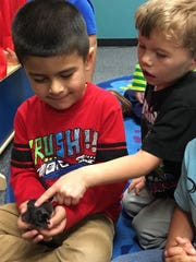 Alta Loma Elementary Pre-K students handle baby chicks that were incubated in their classroom.