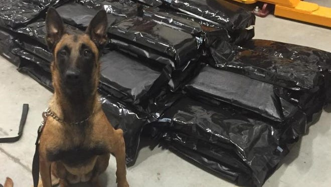 Gemma, a K9 unit with the Yavapai County Sheriff' Office, sits with 90 pounds of marijuana it found in a Missouri man's trunk Monday, Dec. 22.