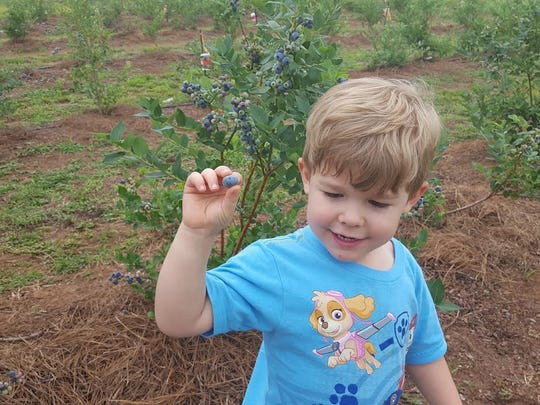 Blueberry bushes are fun for the whole family.
