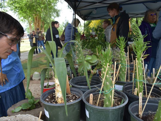 This visitor checks out the Otero County Master Gardeners' booth during the Earth Day celebration in 2017.