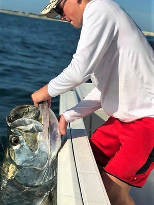 Tarpon have been taking live pilchards around the mouth of Sebastian Inlet this week.