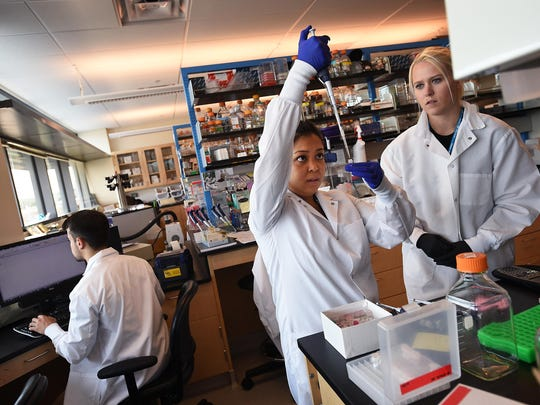 Graduate student Denise Reyes, middle, and undergrad student Heather Green work in a lab at the Center for Molecular Medicine building in Reno on Thursday. Student Adam Kirosingh is on the left.
