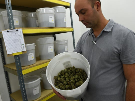 General manager Aron Swan shows off some of his product at the Silver State Relief medical marijuana grow facility in Sparks on July 24, 2015.
