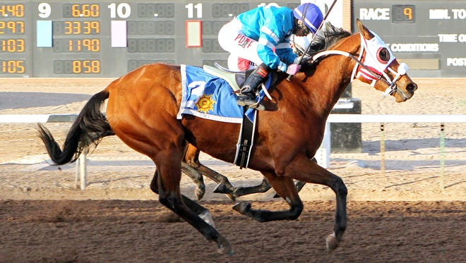 Zasha, ridden by Jesiere Medina, gets up in the final stride to beat stablemate Desert Stepper (hidden) in Saturday's $85,000 Peppers Pride Handicap at Sunland Park Racetrack and Casino.