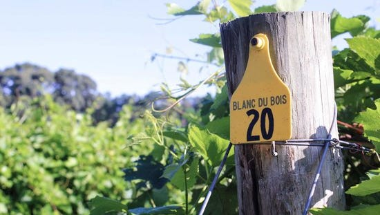 Landry Vineyards, with locations throughout Louisiana, is celebrating Louisiana Wine Month.