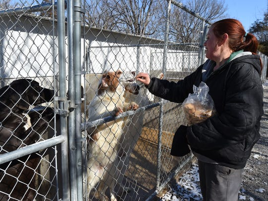 Wendy Maher feeds puppies at Perry's Orphans Sanctuary on Feb. 5. Maher continues to care for the animals at the rescue facility while owner Perry Boore is hospitalized in Little Rock.