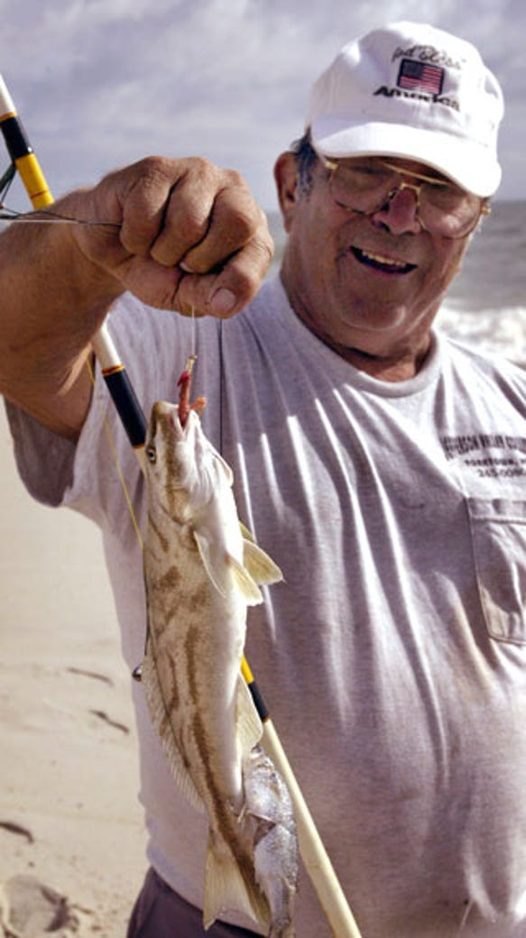 Fishing report kingfish swarm the surf for Ocean city nj surf fishing report