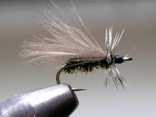 636138796783512815-CPO-MS-110616-Black-Stone-fly.jpg