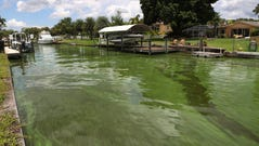 A patch of algae moves up against the end of a canal