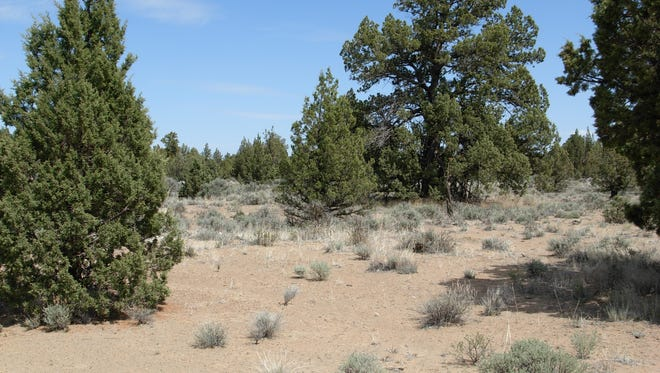 Can You Cut Your Own Christmas Tree In Utah 2020 Permits on sale to cut down your own Christmas tree