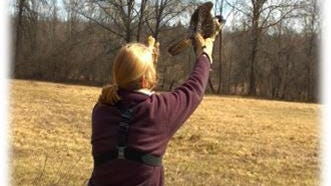 DEP Endangered and Nongame Species Program Supervising Zoologist Kathy Clark releases a rehabilitated falcon at Clinton Wildlife Management Area on Friday, Feb. 26, 2016.