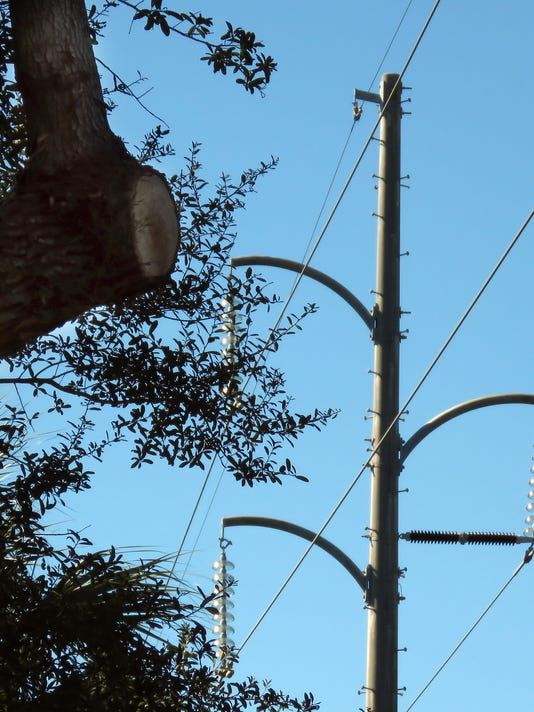 Whisper Oaks trees 4