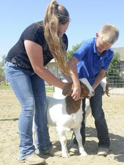 Aurora (left) and Bodie Parsons work together to put a halter on a Boer goat.