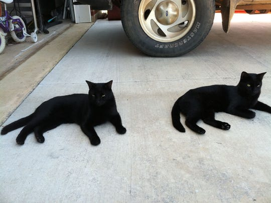 """""""Thing 1"""" and """"Thing 2"""" are our next-door neighbor cats, coal-black beauties that are nearly identical."""
