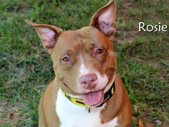 Rosie ID#694812