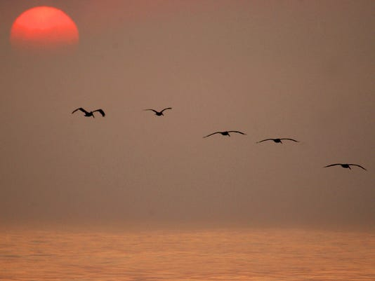 636427147891646439-JD-BirdingFest-Pelicans-1.jpg