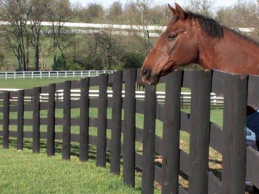 -HORSES SLAUGHTER 042808 2.jpg_20080428.jpg