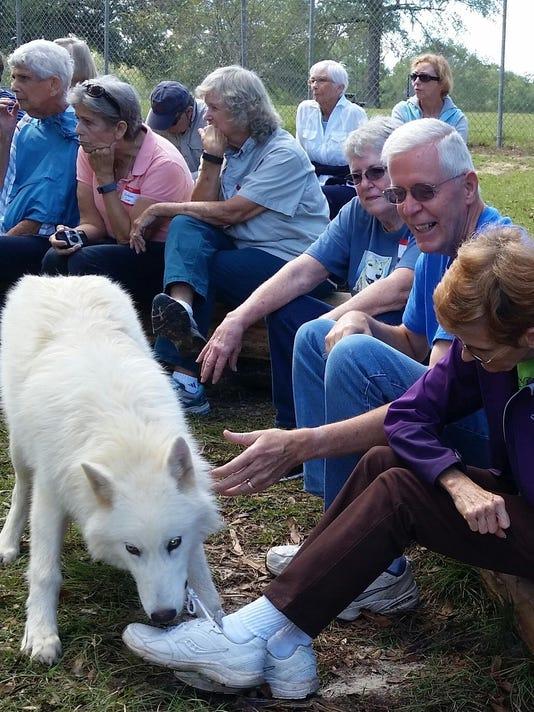 Travel_Playful Arctic Wolf 20151103_112027