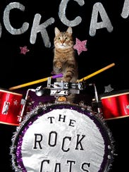 The musically inclined felines knows as The Rock Cats