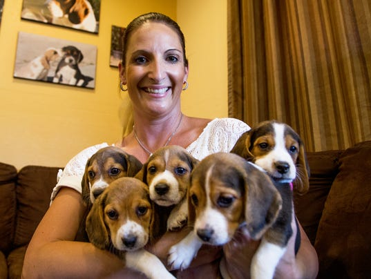 Can You Buy A Adult Dog From A Breeder
