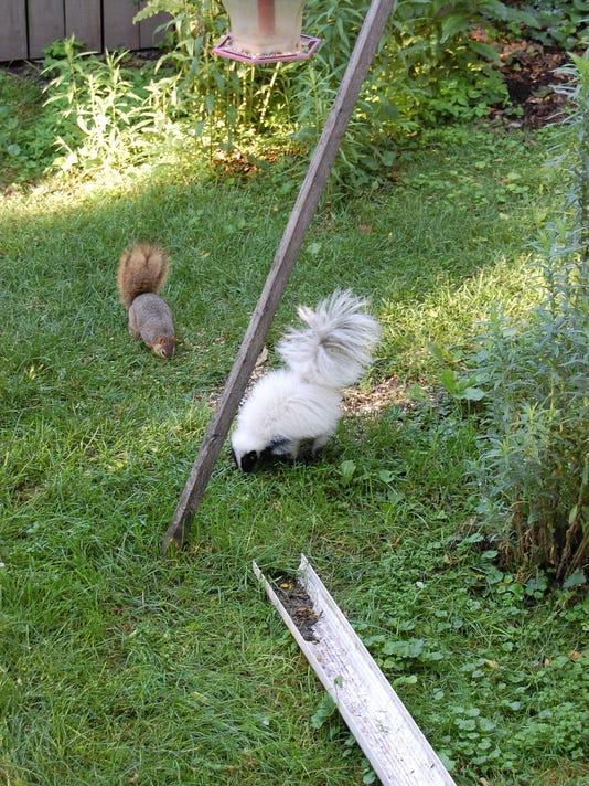 White skunk in Lansing