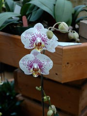 Orchids do well when they are planted near other orchids.