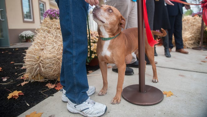 Chief, a pit bull mix that is up for adoption. stands by volunteer James Whiteside of Runnemede, left, during a ribbon cutting ceremony for the Camden County Animal Shelter's  new expansion area held in Blackwood on Thursday.  10.29.15